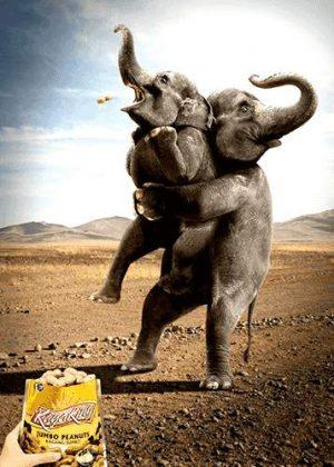 Elefanten und Nüsse