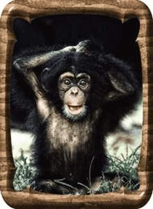 Affe posiert