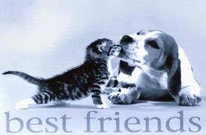 Katze & Hund - Beste Freunde