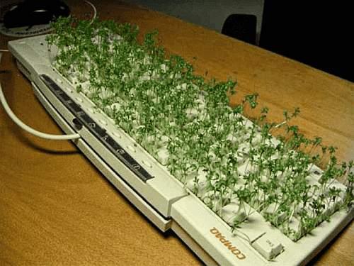 Tastatur mit kleinen Kresse-Pflanzen zugewachsen