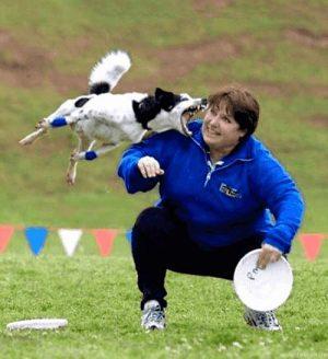 Hund verfehlt den Frisbee