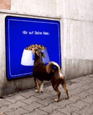 Hund vor Freßnapf