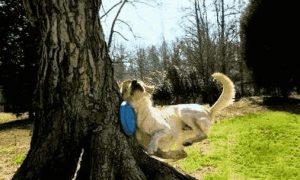 Hund, Frisbee und der Baum