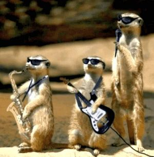 Erdmännchen als Band - Saxophon, Gitarre, Mikrofon