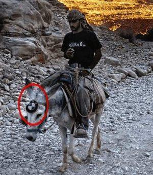 Irgendwo bei den Nomaden - Esel mit BMW Plakette