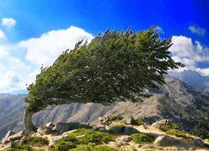 Vom Wind gebogener Baum