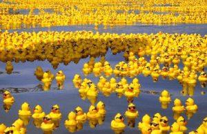 Viele kleine gelbe Enten im Wasser