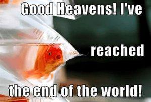 Goldfisch - Das Ende der Welt erreicht