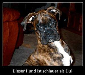 Dieser Hund ist schlauer als Du!