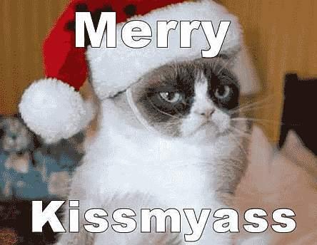 Weihnachten - Katze ist sauer