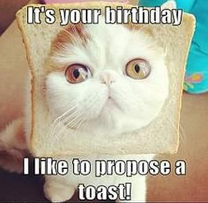 Katze - Einen Toast zum Geburtstag