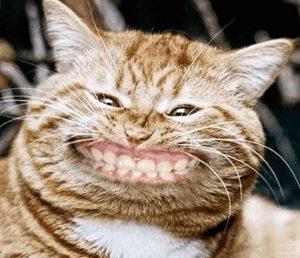 Fies grinsende Katze