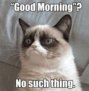 Katze: Guten Morgen! So etwas gibt es nicht.