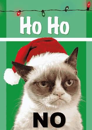 Katze sagt: Sehr witzig, aber nein!