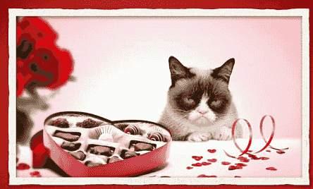 Pralinen für verstimmte Katze
