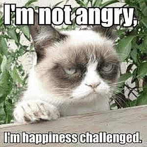 Ich bin nicht verärgert - Katze
