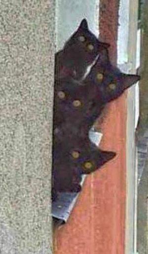 Vier Katzen schauen zusammen aus dem Fenster