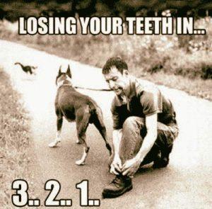 Katze & Hund an der Leine - Zähne verlieren