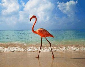 Flamingo stolziert am Strand entlang
