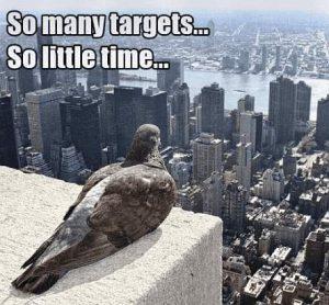 Taube schaut vom Hochhaus auf Großstadt
