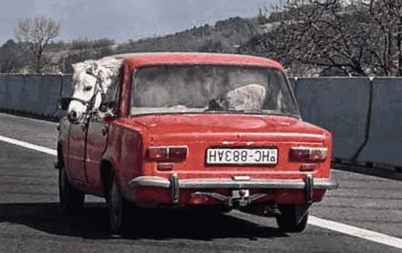 Lustige Auto Bilder
