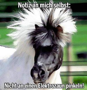 Pferd - Elektrozaun - Mähne
