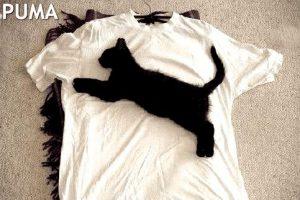 Puma - Schwarze Katze auf weißem T-Shirt