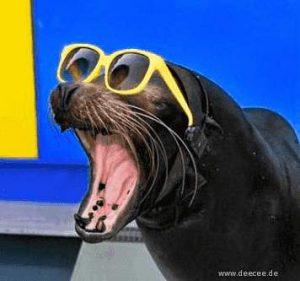 Schwarzer Seehund mit Sonnenbrille reißt das Maul auf