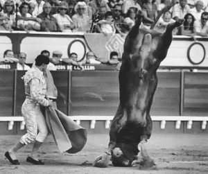 Stier macht Kopfstand vor Torero