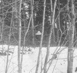 UFO im Wald