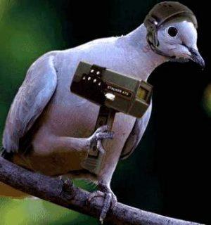 Vogel sitzt auf Ast mit Radar-Falle